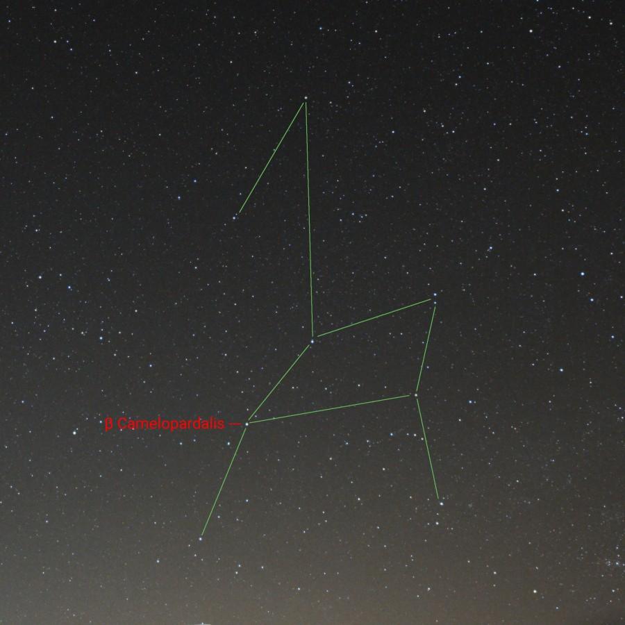 Sternbild Giraffe Sterne